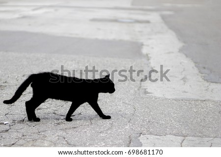 Silhouette of a black cat - an object of superstition of various peoples #698681170