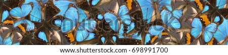 Panoramic abstract background of different tropical butterflies Doxocopa cyane, Kallima, Morpho menelaus #698991700