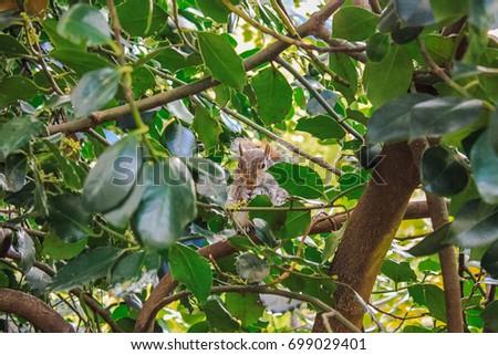 Wildlife Nature Tree Brown Squirrel Jungle #699029401