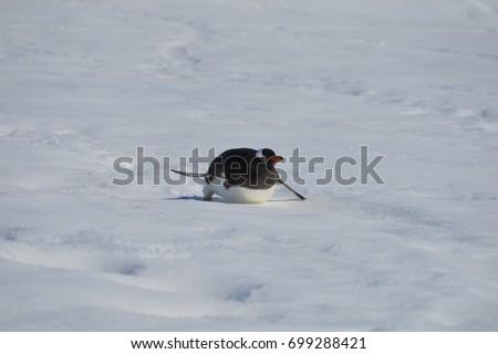 Penguin #699288421
