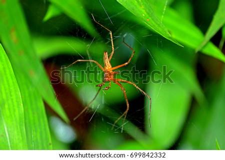 A spider on leaf #699842332