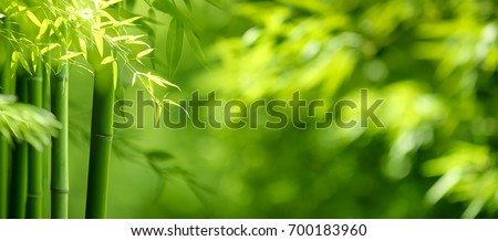 Bamboo forest,green nature background Royalty-Free Stock Photo #700183960