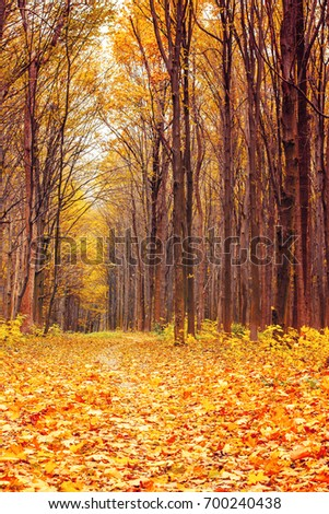 Photo of beautiful orange autumn forest with leaves and road #700240438