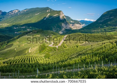 View down the idyllic vineyards and fruit orchards of Trentino Alto Adige, Italy. Val di Non, a vast fruit orchard in the heart of north - western Trentino, Italy. Trentino Alto Adige hills #700667035