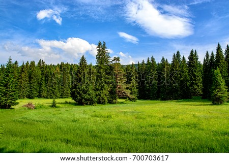 Green forest and meadow in Durmitor National Park - UNESCO World Heritage Centre #700703617