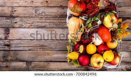 Autumn fruit background. Autumn Thanksgiving seasonal fruit.  Decorative pumpkins,colorful leaves,chestnuts,acorns,Rowan and cranberries .selective focus. #700842496
