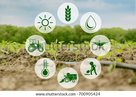 Icons and field on background. Concept of smart agriculture and modern technology #700905424