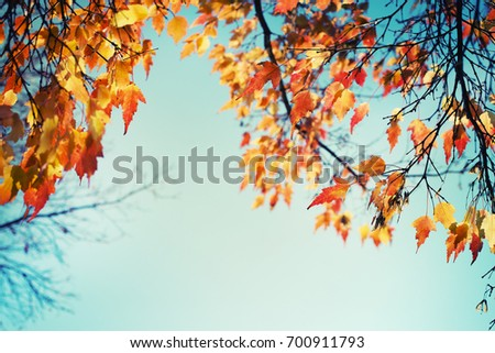 Autumn leaves against blue sky background #700911793