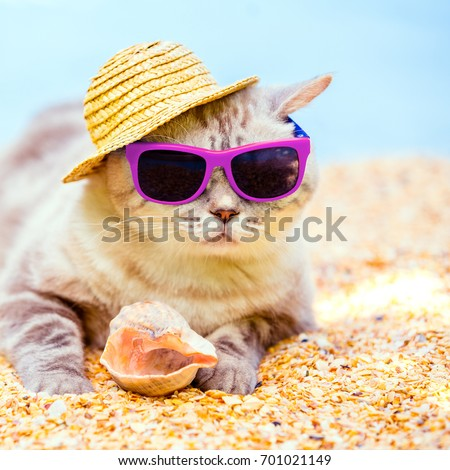 Cat wearing sunglasses and sun hat relaxing on the beach #701021149