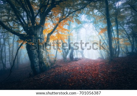 Dark fog forest. Mystical autumn forest with trail in blue fog. Old Tree. Beautiful landscape with misty trees, path, colorful yellow leaves. Nature background. Foggy forest with magical atmosphere  #701056387