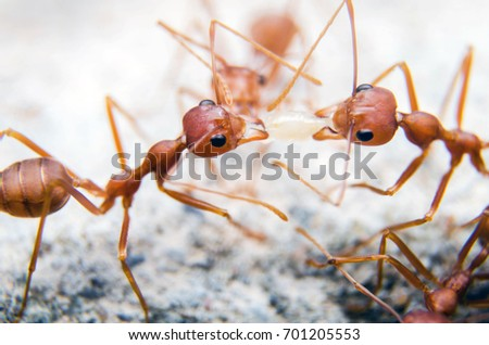 Macro shot,Ants are sending worms to each other,Teamwork.