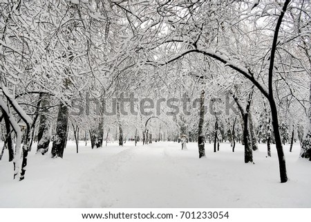 Winter Landscape of the Trees in the Snow #701233054