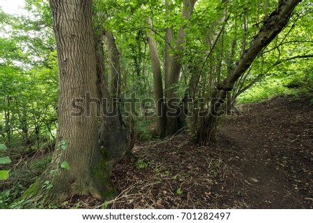 Walk in the woods in the UK in late August #701282497