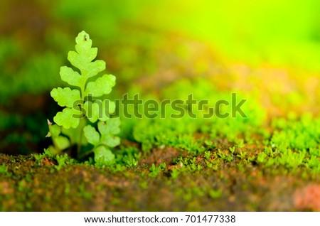 fern leaf born on stone,select focus #701477338