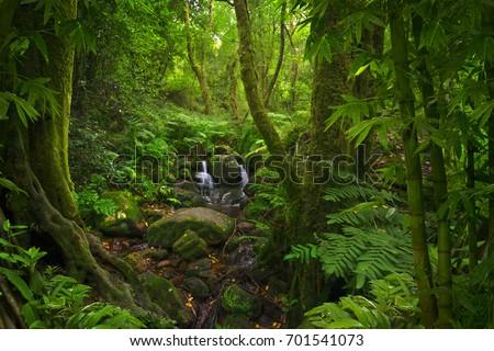 Tropical jungle #701541073
