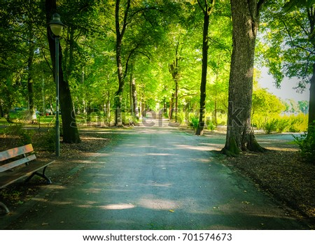 Beautiful Country Road in forest.
