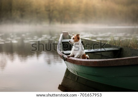 Small dog in a wooden boat on the lake. Breed Jack Russell Terrier #701657953