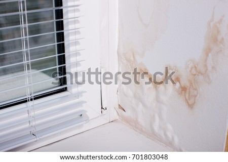 Black Mold fungus grows in the Living Room near the Window, the Walls and Ceiling are covered with Mold. Poorly installed Windows, rainwater penetrates into the Room . - Image                   #701803048