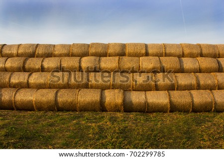 Yellow gold pressed straw in bales #702299785