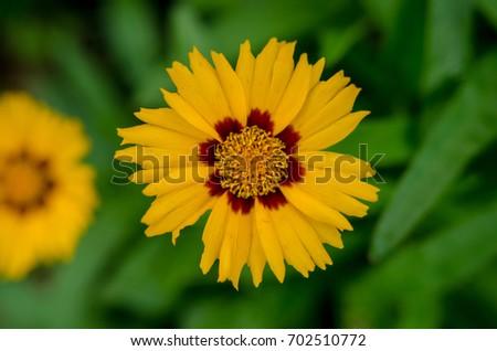 beautiful of yellow #702510772