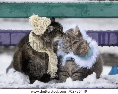Winter meeting two cats on the banch