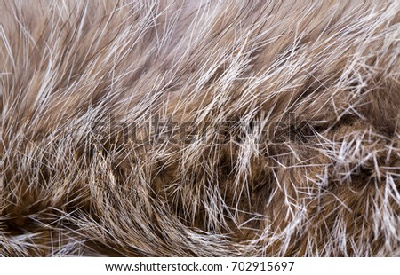 Soft Fur Wool as Background and Texture for Textile and Fur Design Brown #702915697