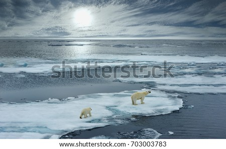 polar bear sow and cub walk on ice floe in norwegian arctic waters and illustrated against sun in distant horizon, wide angle of view Royalty-Free Stock Photo #703003783