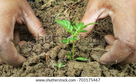Plant a tree with two hands Create a moist soil with two hands, green trees. #703175467