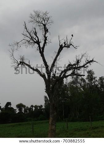 Dry Trees #703882555
