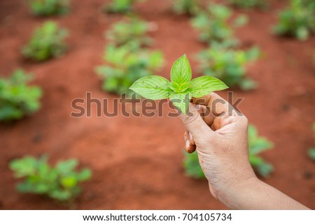 Close up hands of people holding soil and young plant. Ecology and growing plant concept. #704105734