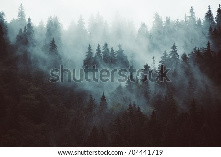 Misty landscape with fir forest in hipster vintage retro style #704441719