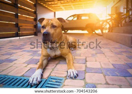 The dog guards the car and the house #704543206