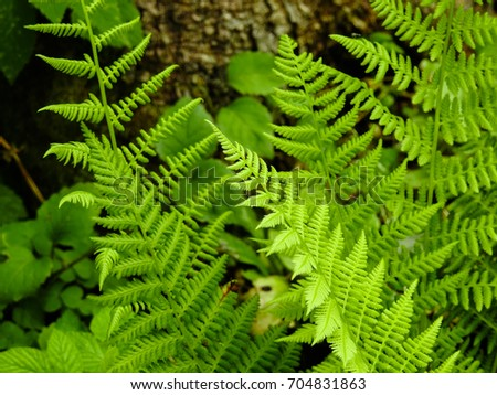 Fern - the oldest plant on Earth #704831863
