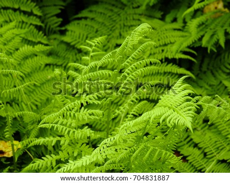 Fern - the oldest plant on Earth #704831887