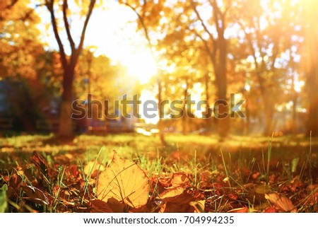 Sunny weather in autumn park in the afternoon #704994235