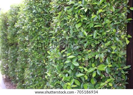 Green grass wall #705186934