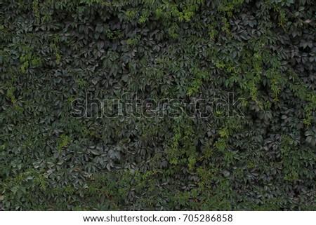 Leaf texture #705286858