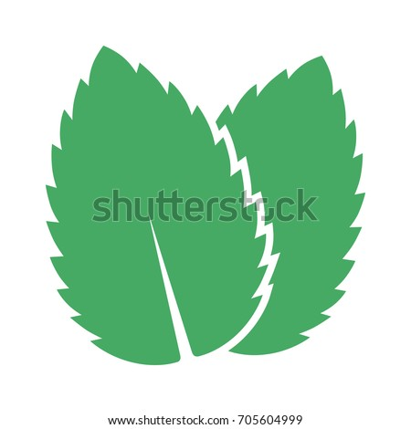 Two peppermint / spearmint mint or mentha leaves flat vector color icon for apps and websites #705604999