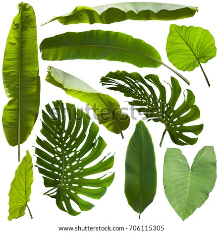 tropical jungle leaves background #706115305