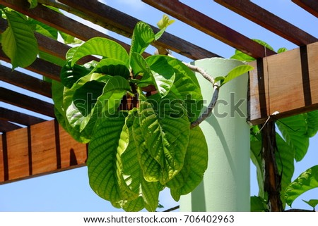 Plants Green with sky on wooden terrace in garden.Green leaf with sky on wooden terrace in garden.  #706402963