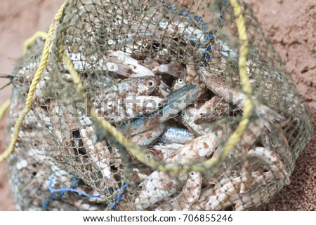 Fresh fish from the fisherman in the bag. #706855246