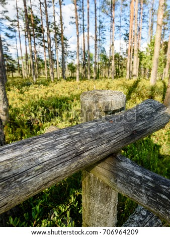 wooden footpath in swamp with beautiful evening sun light in green foliage of summer bog. perspective view - vertical, mobile device ready image #706964209
