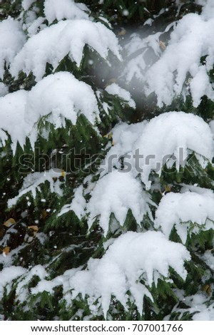 Texture, background, pattern. First snow. White and fluffy. Yellow leaves in the snow. End of November. The middle lane of Russia #707001766