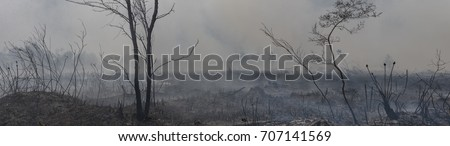 Forest Fire Aftermath #707141569
