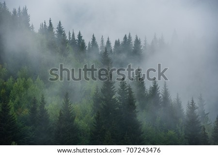 Mountain slopes landscape with fir trees in the fog in Svaneti, Georgia. #707243476