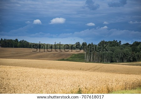 A beautiful country landscape with a wheat fields stretching into distance. Inspiring rural scenery at the end of summer. #707618017