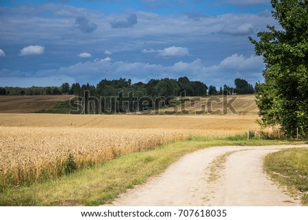 A beautiful country landscape with a wheat fields stretching into distance. Inspiring rural scenery at the end of summer. #707618035