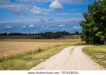 A beautiful country landscape with a wheat fields stretching into distance. Inspiring rural scenery at the end of summer. #707618050
