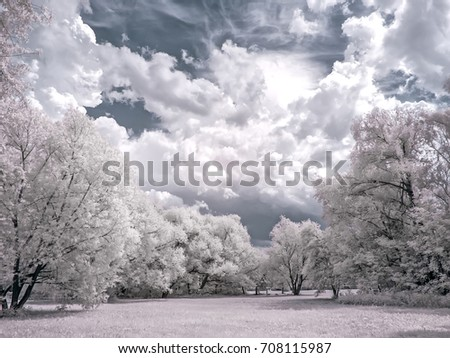 Infrared photography. Trees against the sky. Glade in the forest