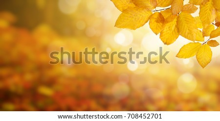 Autumn leaves on the sun and blurred trees . Fall background. Royalty-Free Stock Photo #708452701